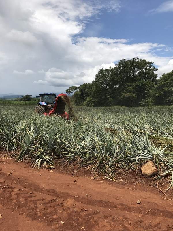 Costa Rica: energy and fertilizers from pineapple residues